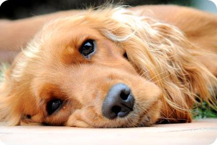 2 ans de prison ferme pour avoir torturé son chien